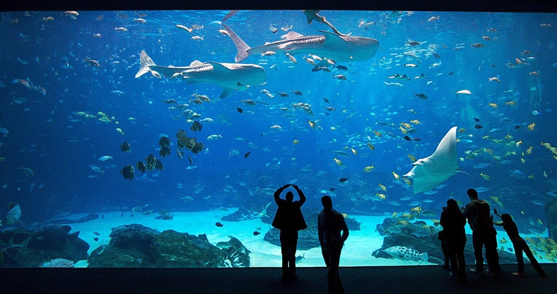 Images of aquarium dating