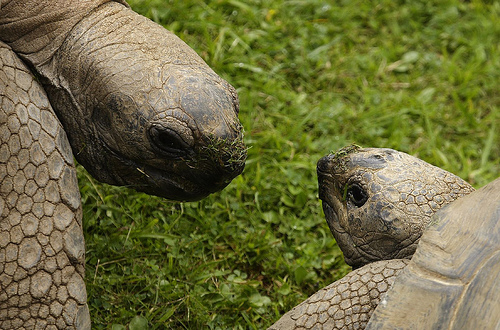 Tortuise Couple