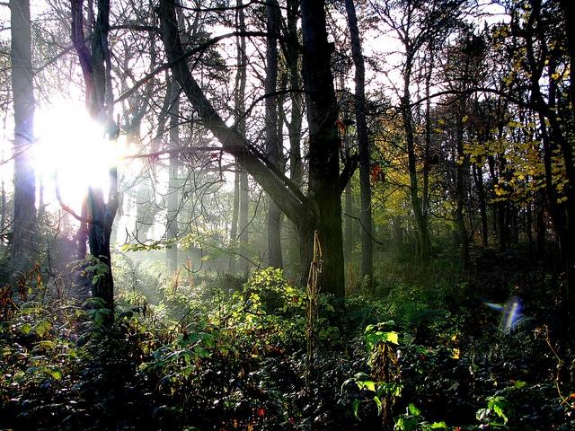 Pollok Country Park