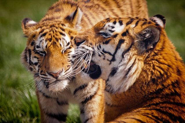 Blackpool Zoo_Blackpool