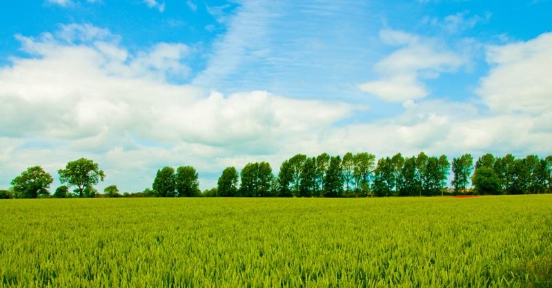 Kildare Photo 1