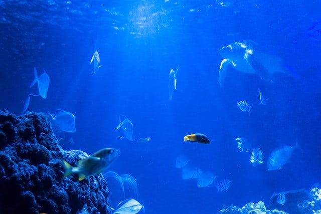Sea Life Centre_Birmingham