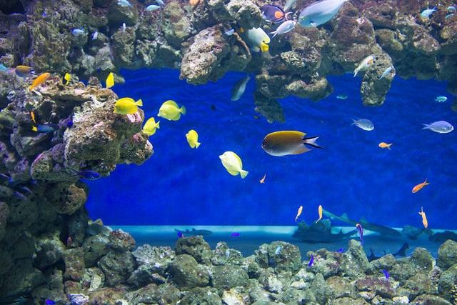 Aquarium_Chester