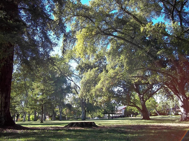 William Park_Sacramento
