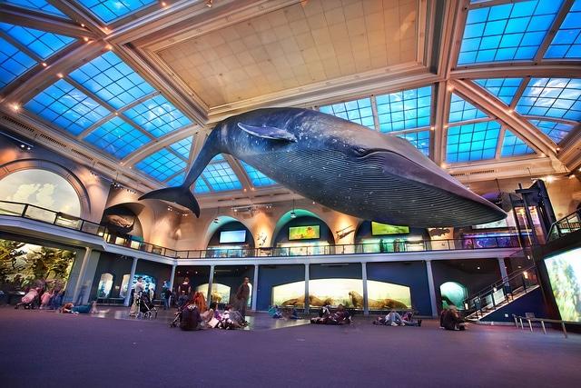 American Museum of Natural History_Manhattan