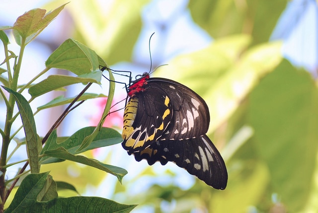 Butterfly World_Fort Lauderdale